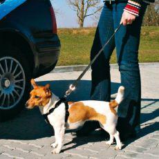 Bezpečnostní vodítko pro psa do auta, 40-60 cm