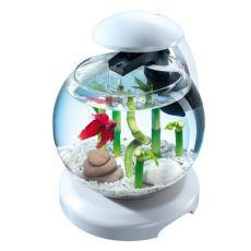Akvárium pro bojovnici nebo karase, bílé - koule 6,8 l