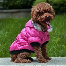 Bunda pro psa s černým lemováním- růžová, L