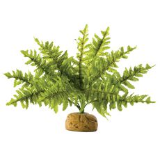 Exo Terra rostlina do terária - Boston Fern Small, 20 cm