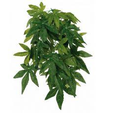 Rostlina do terária Abutilon – závěsná 20 x 50 cm
