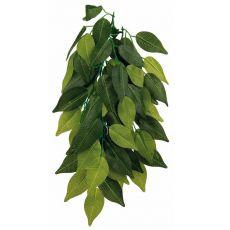 Rostlina do terária FíKUS – závěsná 20 x 50 cm