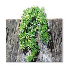 Rostlina do terária TerraPlanta Cannabis – 65 cm