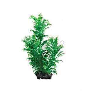 Tetra akvarijní rostlina – Green Cabomba S, 15 cm