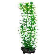 Egeria densa (Anacharis) - rostlina Tetra 15 cm, S