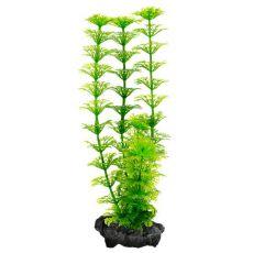 Limnophila sessiliflora (Ambulia) - rostlina Tetra 30 cm
