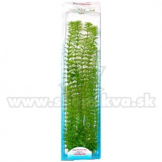 Limnophila sessiliflora (Ambulia) - rostlina Tetra 46 cm