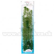 Cabomba caroliniana (Green Cabomba) - rostlina Tetra 38 cm, XL