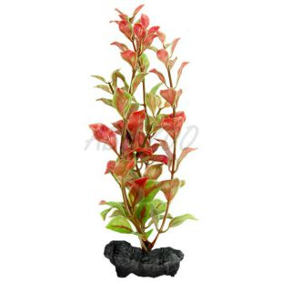 Ludwigia repens (Red Ludwigia) - rostlina Tetra 15 cm, S