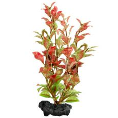 Ludwigia repens (Red Ludwigia) - rostlina Tetra 23 cm, M