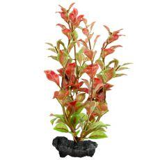 Ludwigia repens (Red Ludwigia) - rostlina Tetra 30 cm, L