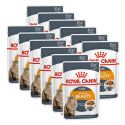 Royal Canin Intense BEAUTY 12 x 85 g - kapsička