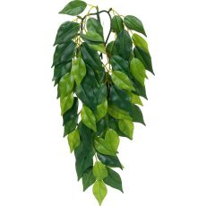 Ficus silk small - rostlina do terária, 45 cm