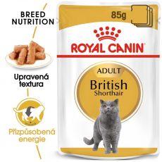 Royal Canin British Shorthair - kapsička, 12 x 85 g